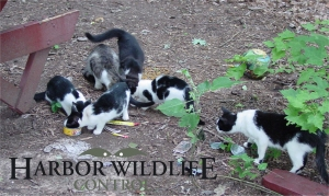 Feral Cat trapping