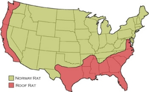 Distribution of Rats in the U.S.